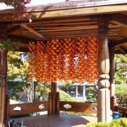 Korean-Persimmons with a kiosk