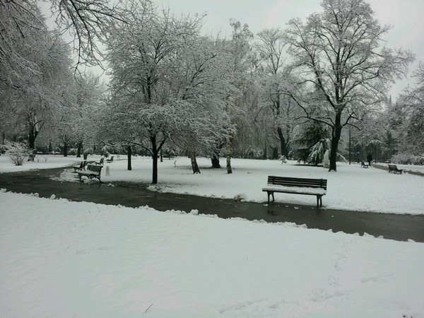 Serbia Park - 세르비아 공원