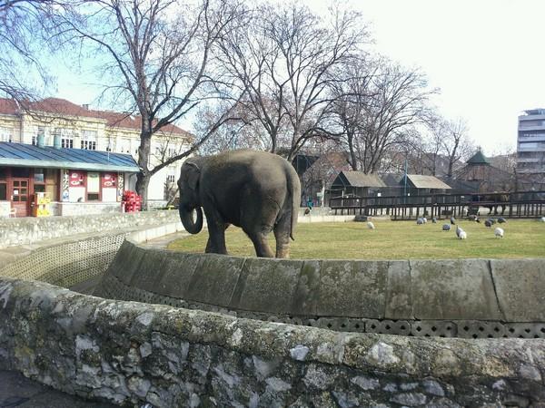 Serbia Zoo - 세르비아 국회 대통령궁 동물원